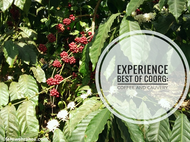 Experience Best of Coorg: Coffee and Cauvery - Fernwehrahee