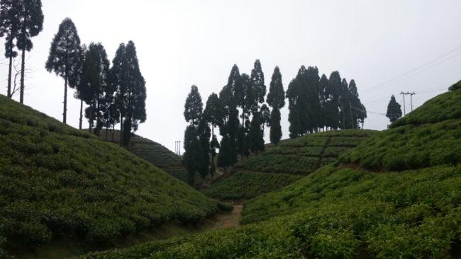 Mirik day trip from Darjeeling