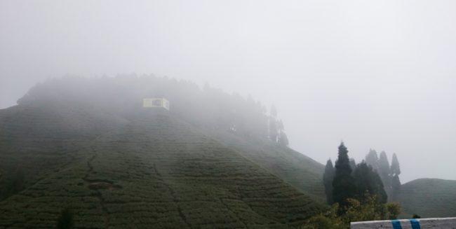 Mirik tea estates