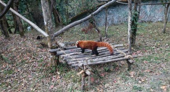 best Places to visit in Darjeeling zoo