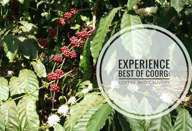 coffee plantations coorg