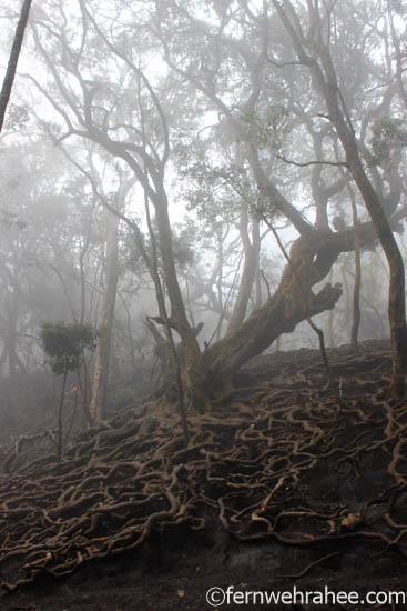 Guna Caves - Places to visit in kodaikanal