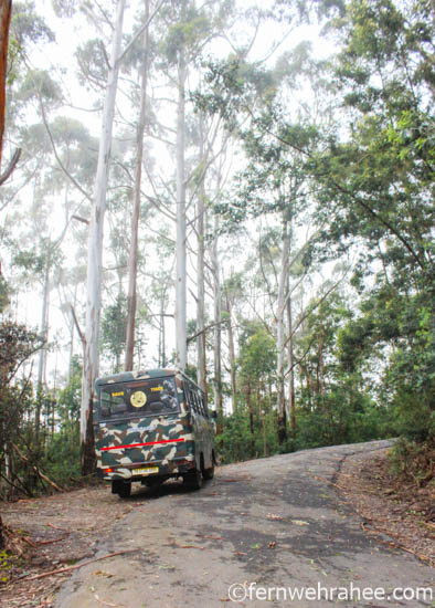 Berijam Lake viewpoints sightseeing by Forest Vehicle